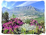 The majestic Table Mountain in Table Mountain National Park