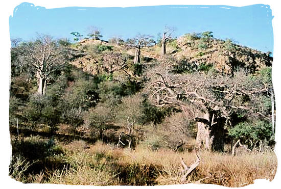 The hilltop on which the ruins of the Thulamela Royal citadel were found