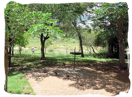 View from one of the cottages at Biyamiti bushveld camp towards the Mbiyamiti river bed
