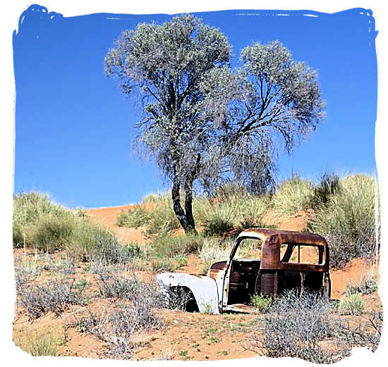 This one didn't survive - Kalahari Desert Climate in the Kgalagadi Transfrontier National Park